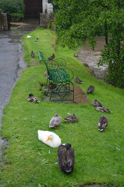 Seat Beside the River Leven