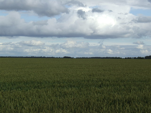 Flat wheat fields between Eltisley and Caxton