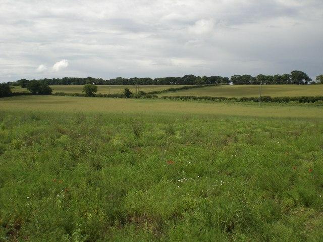 North west from bridlepath near Great Walsingham