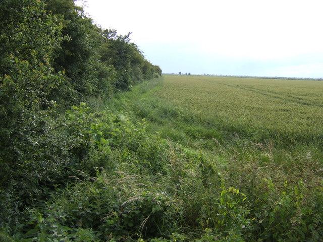 Fenland field boundary