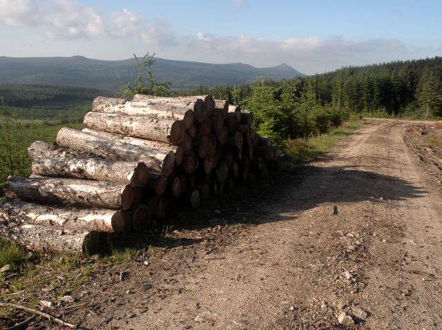 Timber Stack and Forestry Road