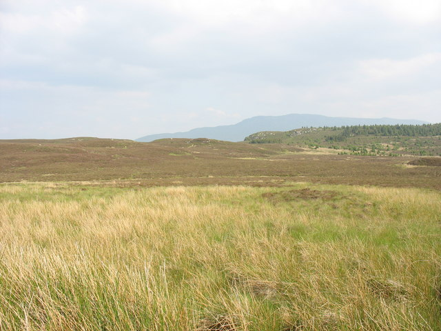 View across the moorland towards the forest edge