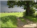TF9639 : Track running south near Ellis Farm by Nigel Jones