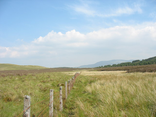 Following a fence towards the forest edge through a squelchy bog