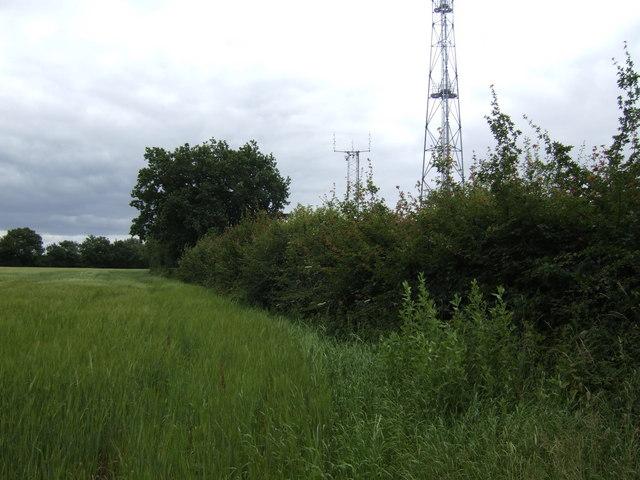 Barley field and Humble Green masts
