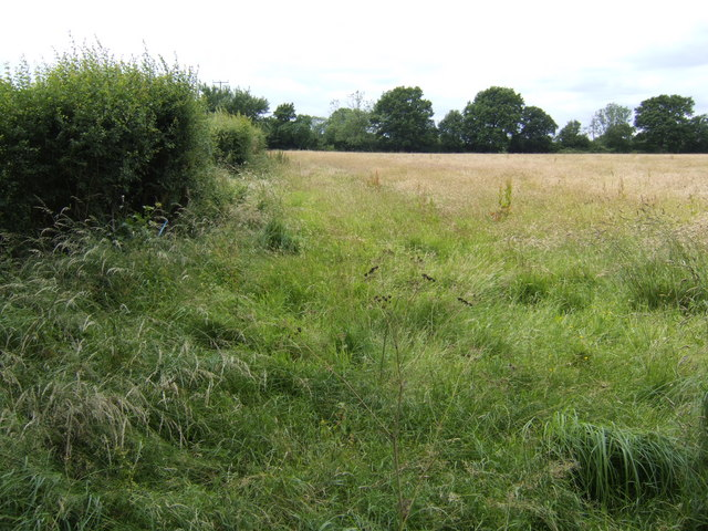 Ripening barley near Rickland Farm