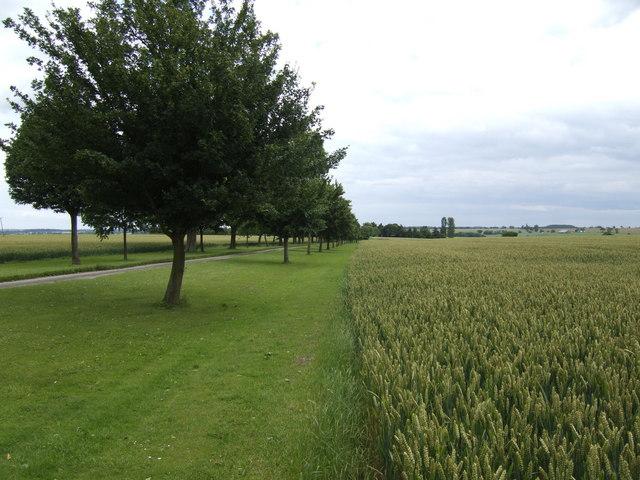 Wheatfield, driveway and avenue