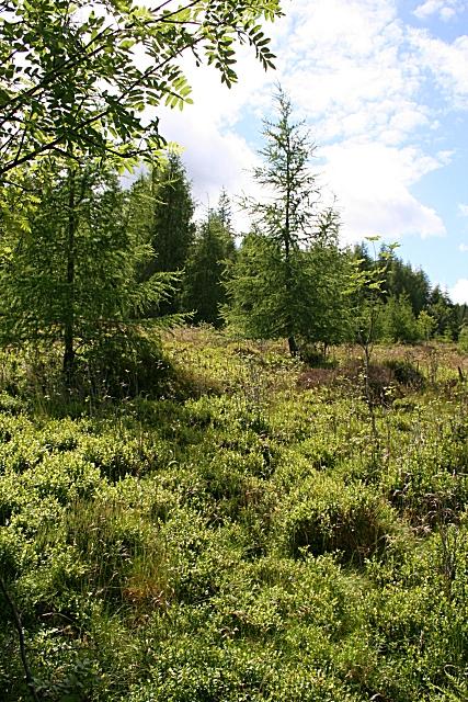 Hillside Wood