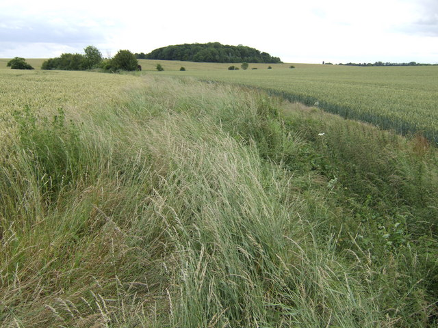 View south to Avesey Wood