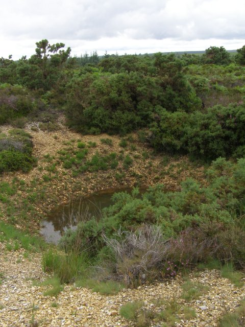 Bomb crater southeast of Ticketsbury, New Forest