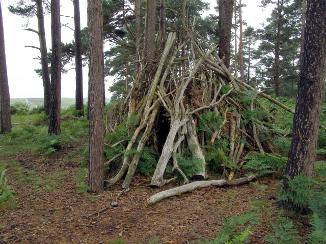 Temporary shelter amongst the pines, Ticketsbury, New Forest