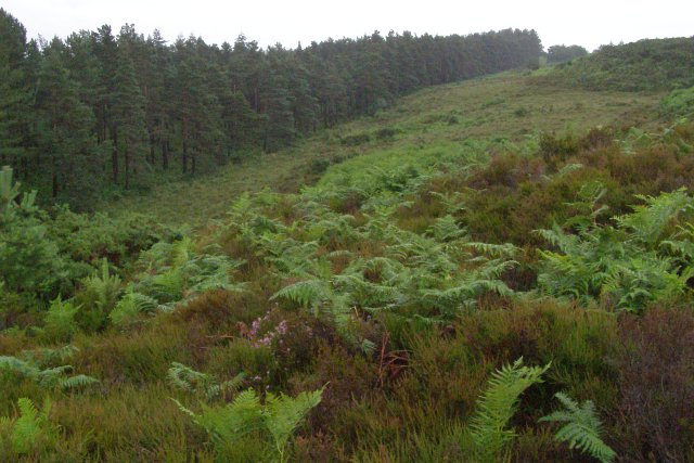 Southern edge of Pitts Wood Inclosure, New Forest