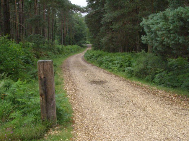 Track from Ashley Cross descending into Pitts Wood Inclosure, New Forest
