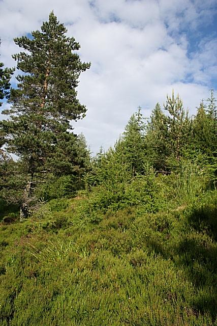 Scug Wood