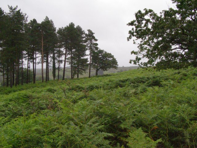 South-east corner of Pitts Wood Inclosure, New Forest