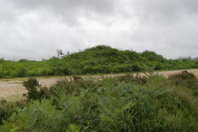 Tumulus at Ashley Cross, New Forest