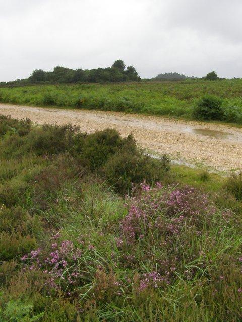 Heathland in the rain, Ashley Walk, New Forest