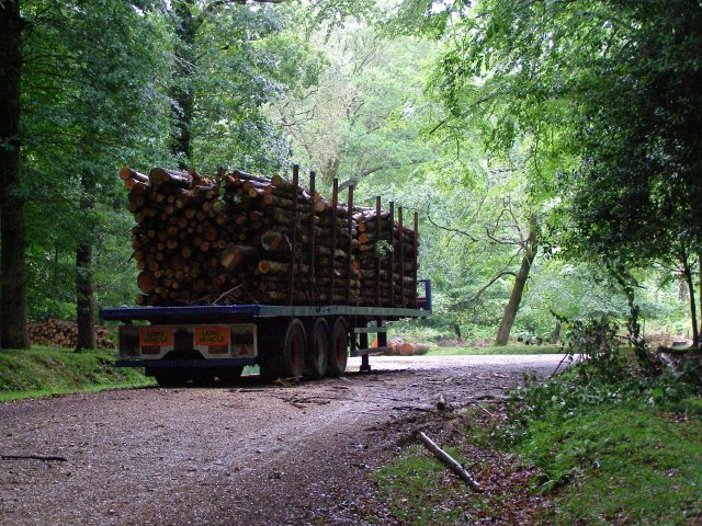 Timber trailer, Islands Thorns Inclosure, New Forest