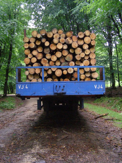 A load of logs, Islands Thorns Inclosure, New Forest
