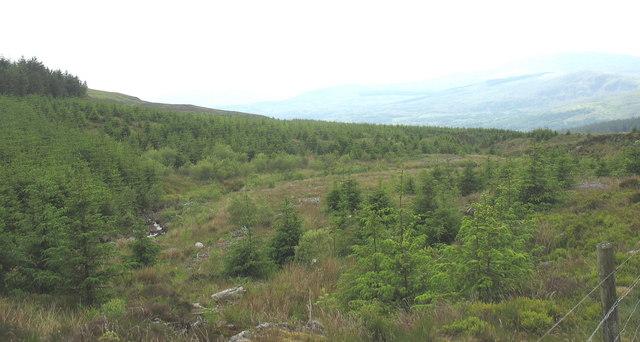 Young plantation east of Afon Harnog
