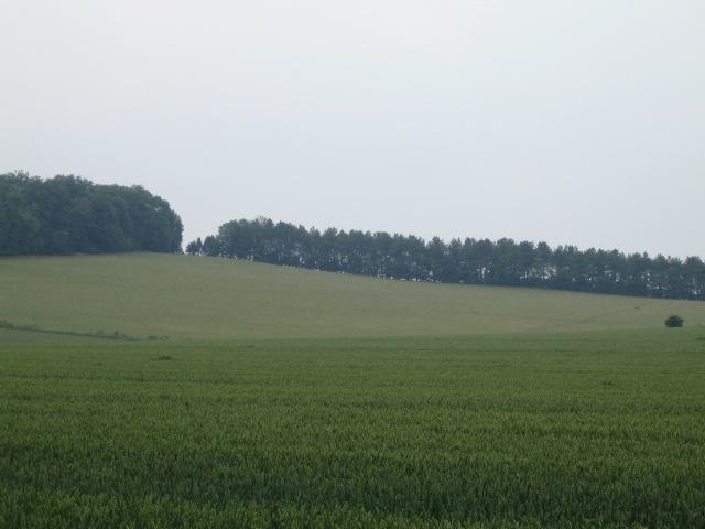Field and hilltop trees, Buckholt