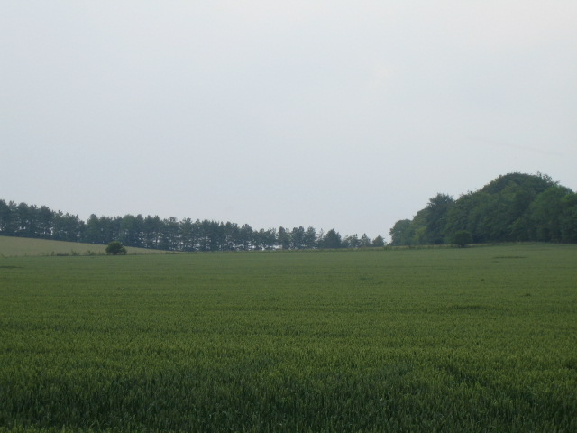 Field and hilltop trees, Buckholt 2