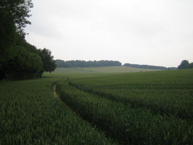 Field near Warren Farm, Buckholt