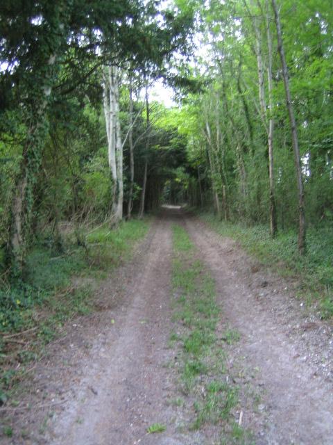 Track near Khyber Pass, Buckholt