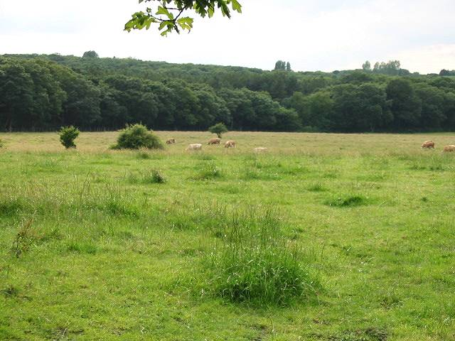 Thornden Meadow, a nature reserve
