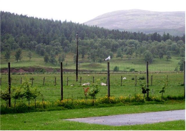 View from Braemar Kirkyard