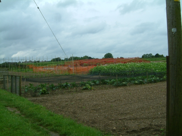 West Dereham Allotments