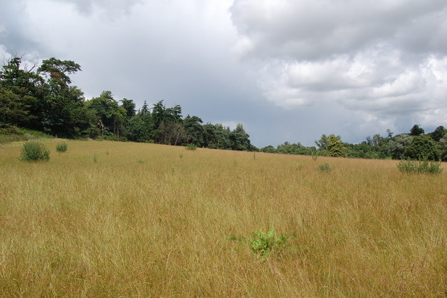 Grassland near Cliff Farm