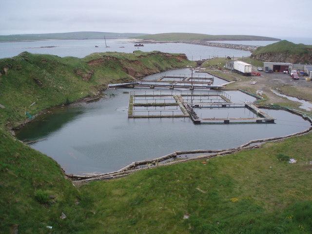 Old Quarry, New Fish Farm