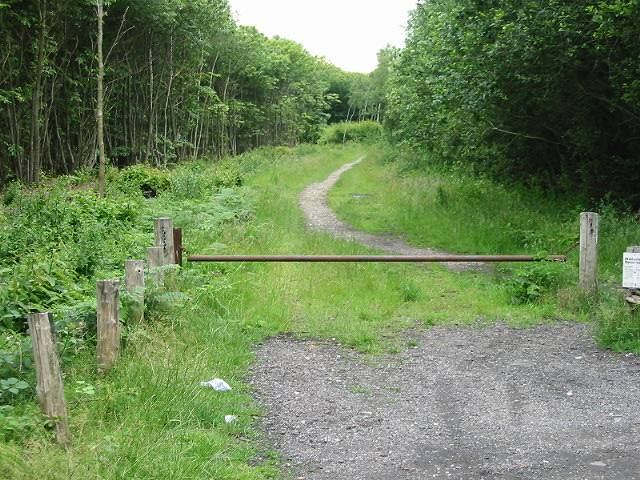 Track leading from car park through Thornden Wood