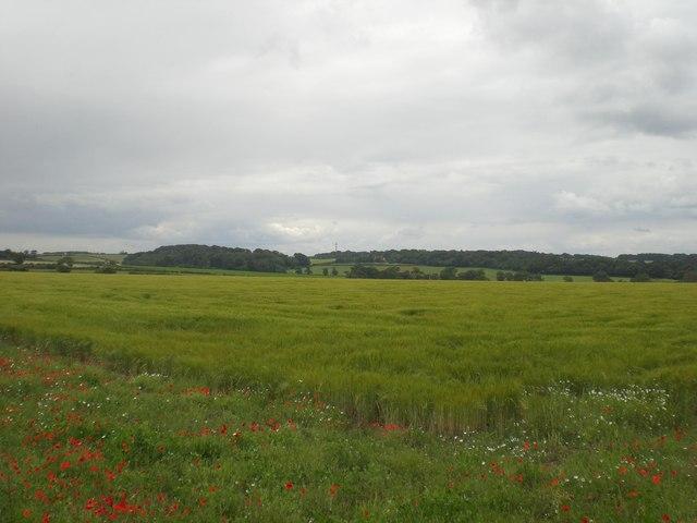 North west towards Sussex Farm across barley