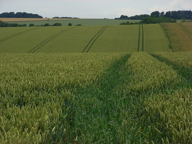 Farmland near Deptford