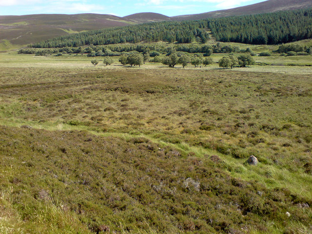 Heather and forestry in the Helmsdale valley