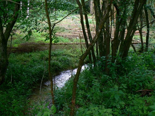 Small stream, Marshfield Wood
