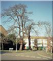 TQ3573 : Haredon Close by David Wright