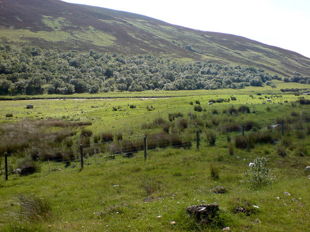 Helmsdale River, hillside, forest and grazing