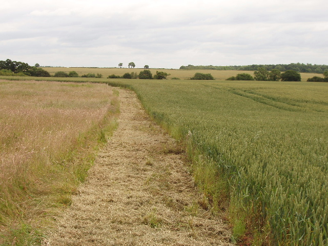 Bridleway cut between grass and wheat