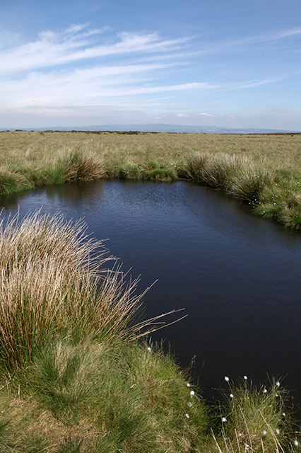 Small pond on Wheelton Moor