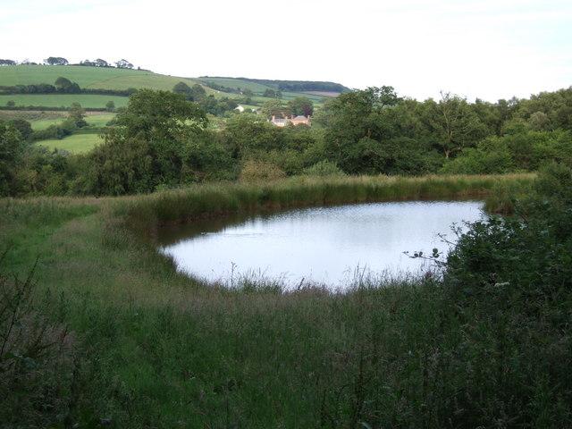 Pond near Knacker's Hole