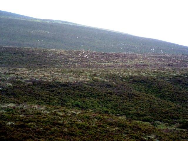 Deer on a hillside