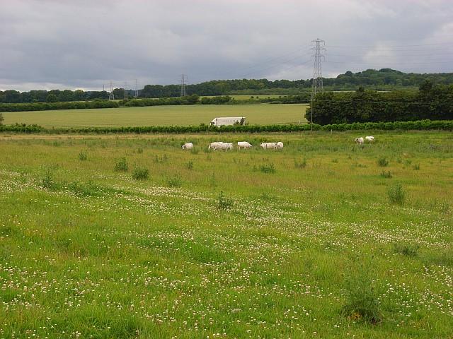 Farmland, Shipton Bellinger