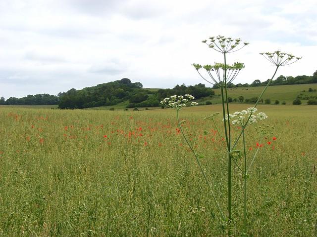 Farmland, Cholderton