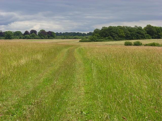 Grassland, Cholderton