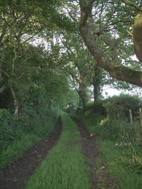 Bridleway through Keeper's Cottage Plantation