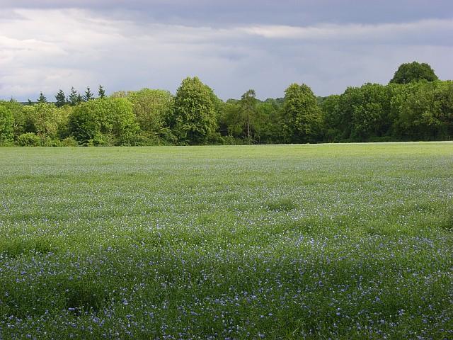 Field of flax, Newton Tony