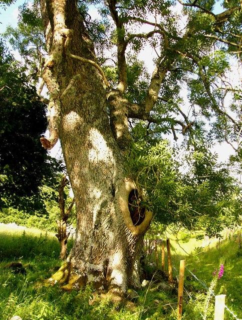 The Boy Tree